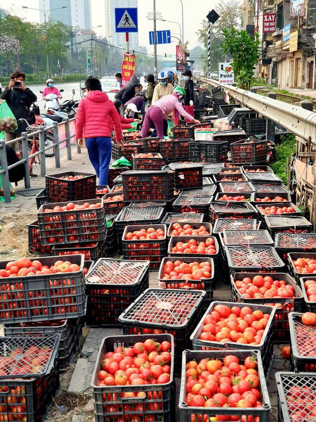 Cà chua rất giàu vitamin và khoáng chất, có thể chế biến thành nhiều món ăn thơm ngon, tốt cho sức khỏe.