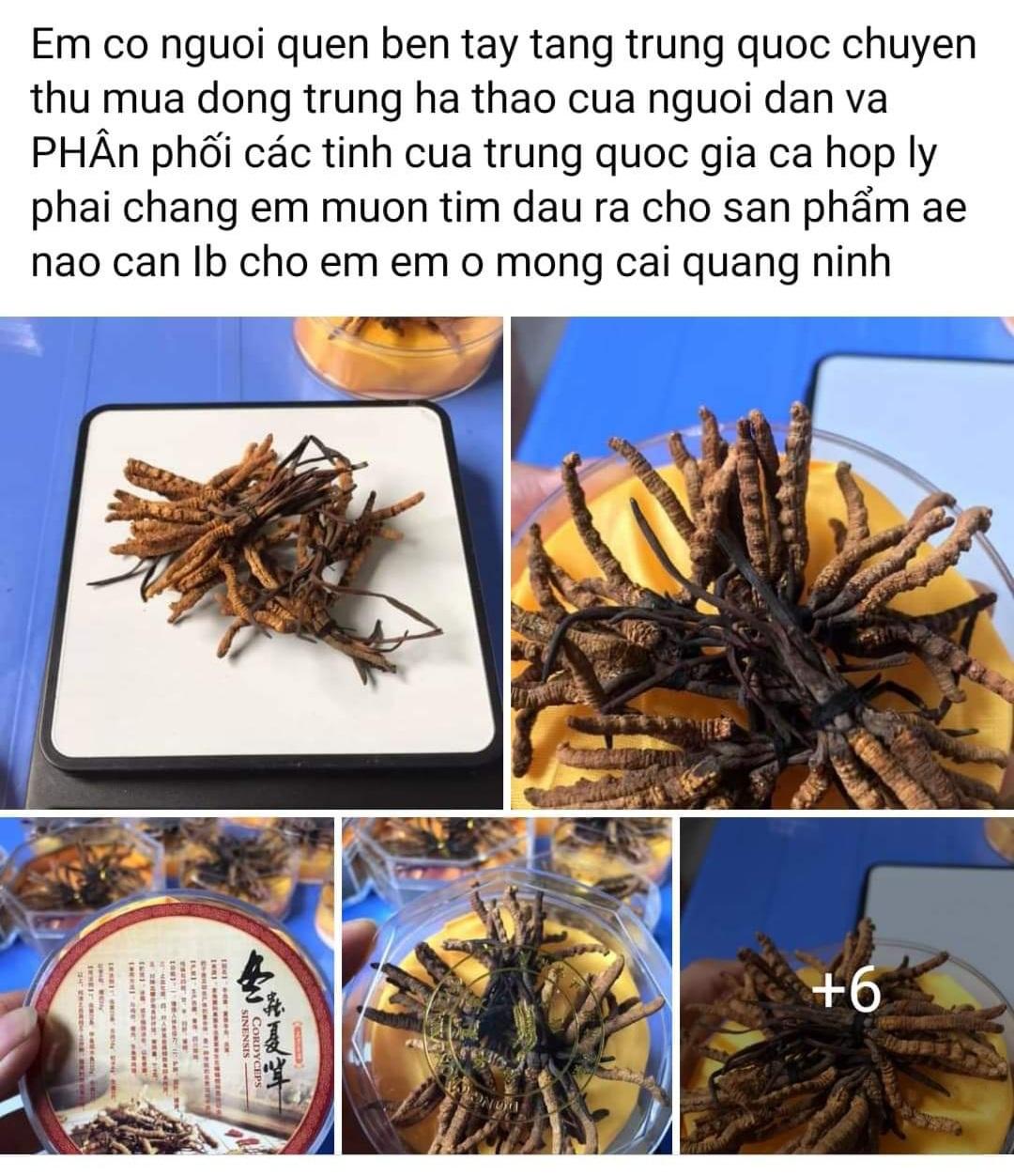 thi-truong-dong-trung-ha-thao-no-ro-loan-gia-loan-chat-luong