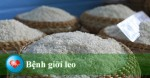 9-hanh-dong-can-lam-ngay-de-giam-nguy-co-mac-benh-khong-lay-nhiem
