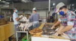 Làm sạch lông hàng ngàn con vịt bằng 'chất lạ'