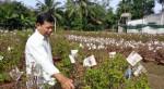 Người trồng hoa giấy bán Tết Mậu Tuất lại khốn đốn vì tin đồn 'ung thư'