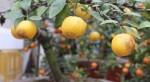 moi-la-van-tue-mini-bonsai-vua-de-chung-tet-lai-hung-thinh-ben