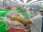 Áp thuế cao nhất trong lịch sử, cá tra Việt hết đường vào Mỹ.
