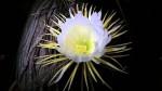 """""""Đau tim"""" với giá tiền của 6 loài hoa đắt nhất thế giới"""
