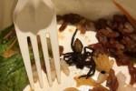 Cách xử lý bất ngờ của chủ cửa hàng khi thực khách phát hiện nhện trong đồ ăn