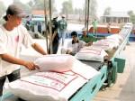 """Giá gạo xuất khẩu """"lên đỉnh"""", vượt cả """"ông trùm"""" Thái Lan"""