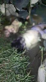 Thực hư vụ livestream phát hiện xác 3 người bị giết tại Bắc Giang