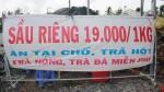 Chuyện lạ: Sầu riêng 19.000 đồng/kg, dân ùn ùn kéo đến ăn thả ra