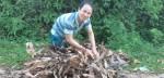 Ở nơi dân chỉ cần ra vườn hái lá cây rừng bán là có tiền tiêu