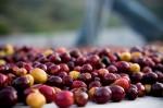 Giá nông sản hôm nay 13/11: Giá cà phê, giá tiêu cùng