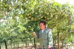 Bỏ ngô, trồng loài cây ra quả tròn như ngọc xanh, cả làng khá giả