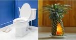 toilet-van-thom-sau-khi-di-ve-sinh-nho-vai-meo-don-gian