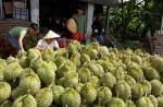 Trung Quốc sẽ mở cửa thêm 7 loại củ quả: Đàng hoàng đi chính ngạch