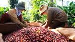 Giá nông sản hôm nay 24/4: Giá cà phê giảm 200 đ/kg, giá tiêu ổn định