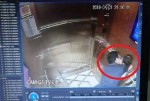 Ông Nguyễn Hữu Linh sàm sỡ bé gái có thể chịu án phạt đến 3 năm?