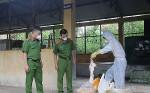 Lạng Sơn: Bắt giữ 600kg nầm lợn bốc mùi hôi thối sắp tuồn ra thị trường