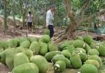 mit-thai-rot-gia-khong-phanh-con-8-000-dong-kg
