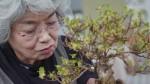 Nghệ nhân Nhật lý giải tại sao cây bonsai có giá trên 1 triệu USD
