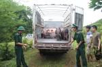Thực hư việc chuyển lợn từ Thái Lan về Việt Nam, cần kiểm soát chặt