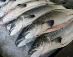 Cá hồi giảm giá sâu vì COVID-19