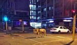 Thực hư tin Nga thả 500 sư tử ra phố để người dân ở nhà tránh dịch COVID-19?