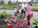 Chị bán hoa chia sẻ 7 bí quyết phân biệt cực nhanh giữa sen và quỳ