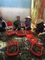 Kiên Giang: Bắt quả tang cơ sở kinh doanh tiêm tạp chất vào tôm nguyên liệu