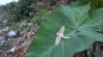 Kỳ lạ loài côn trùng chỉ sống vài tiếng trong đời nhưng khi thành món ăn thì gây nghiện, nhất định phải nếm 1 lần