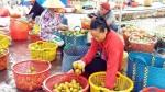 Hồng xiêm tăng giá kỷ lục, một mùa bội thu tiền tỷ