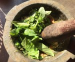 Thứ muối thần kỳ làm từ lá của cây gia vị này, đảm bảo ướp món nào cũng ngon, chấm món nào cũng phê