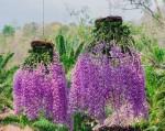 3 loại hoa lan