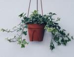 10 loại cây ít cần chăm sóc nhưng vẫn tươi xanh, đẹp mắt khi trồng trong nhà