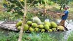 Vì sao anh nông dân Tiền Giang đốn 1.000 cây mít Thái trồng ổi Đài Loan, giá mít tăng?