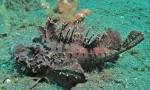 Con cá xấu xí đến kinh dị, trước làm thức ăn cho gà, vịt giờ trở thành món khoái khẩu của nhiều người