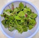 Cách cực mới bảo quản rau tươi để 1 tháng vẫn tươi rói, giữ nguyên dưỡng chất