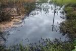 Kinh hoàng nguồn nước, ruộng đồng bị