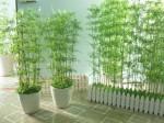 Cách bài trí cây xanh giúp xua tan bệnh tật gia chủ