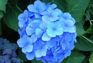 Những loại hoa mẹ tuyệt đối không cắm trong nhà kẻo hại bé