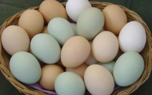 Thực hư tin đồn trứng gà vỏ xanh giàu dinh dưỡng hơn trứng gà vỏ đỏ và trắng