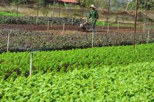 Kinh nghiệm cho thuê đất trồng rau sạch và các bước tiến hành