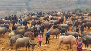 Những khu chợ độc, lạ chỉ có ở Việt Nam