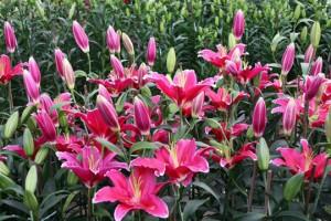 Những loại hoa chơi Tết