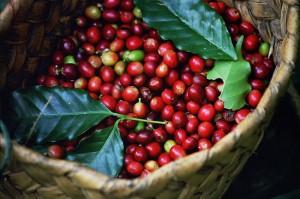 Giá nông sản hôm nay 21/3: Giá tiêu giảm ky lục còn 51.000 đ/kg, cà phê giảm nhẹ