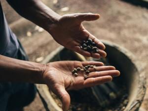 Giá nông sản hôm nay 9/3: Vừa hết 8/3, giá cà phê đã giảm sâu, giá tiêu ít biến động