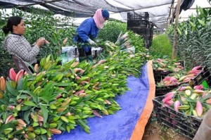 Nóng nông sản Việt, Bộ ra công văn hỏa tốc