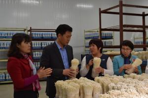 Tiên phong trồng nấm công nghệ cao