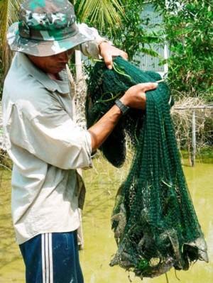 Cá Ma xuất hiện, hiểm họa trên sông, nông dân khiếp sợ