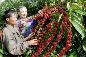 Giá nông sản hôm nay 18/4: Giá cà phê tăng từ 200-300 đồng/kg, hồ tiêu tăng nhẹ