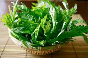 Ngải cứu được xem là 'thảo dược quý' trong sách cổ: 5 cách dùng hiệu quả bạn nên tham khảo