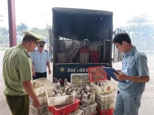 Quảng Ninh: Bắt giữ 945 con chim bồ câu và 1.100 hộp kem ủ dưỡng tóc nhập lậu